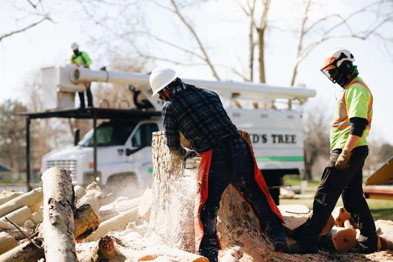 stump removal west richland wa