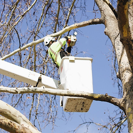 tree trimming in richland wa
