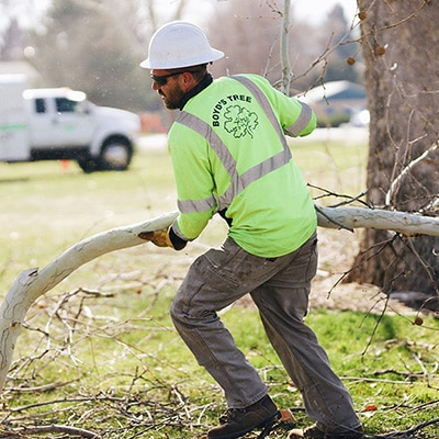 boyds tree trimming kennewick