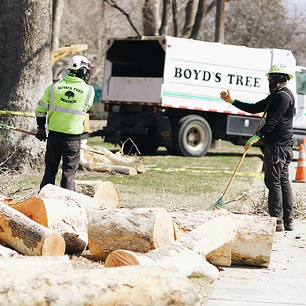 tricities tree removal