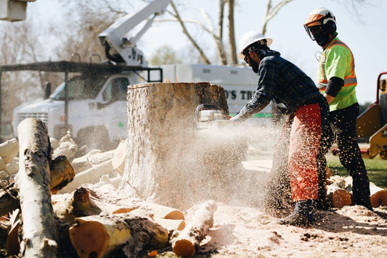 commercial stump removal in pasco wa