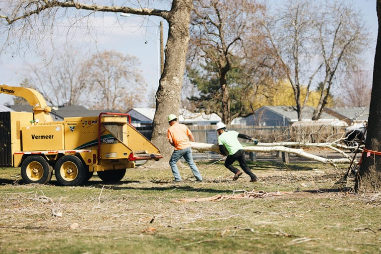 expert tree removal tricities wa
