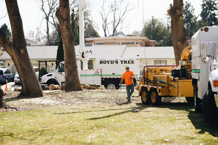 commercial tree removal tricities wa