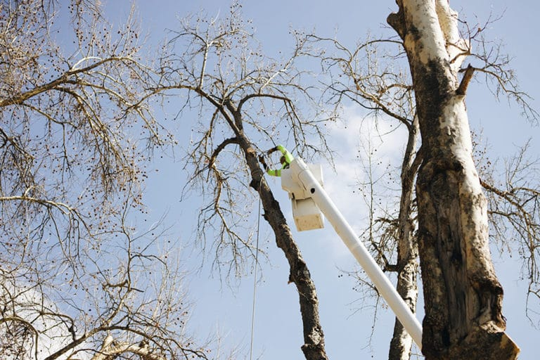 tree pruning in richland wa
