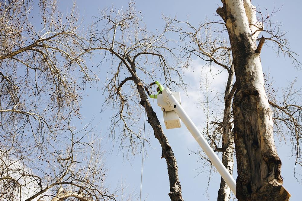 tree pruning in richland wa