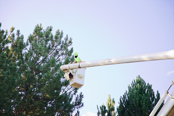power line clearing pasco