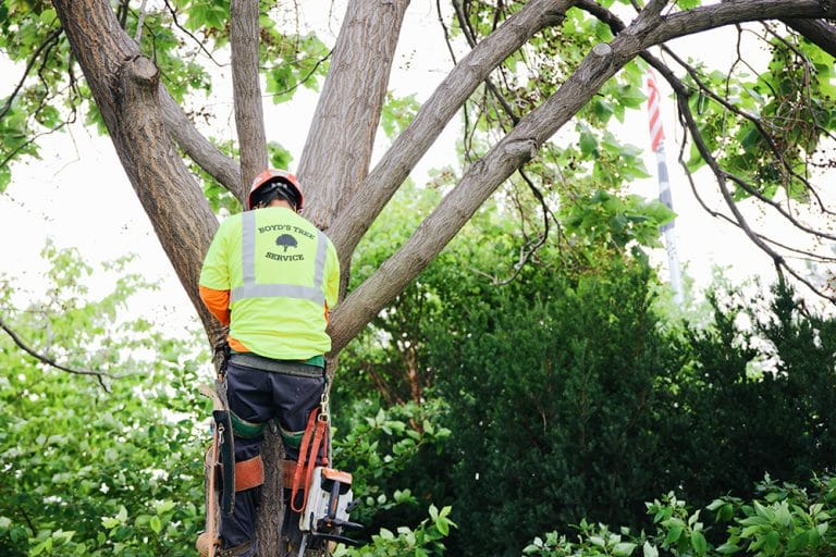 tree inspection and preservation