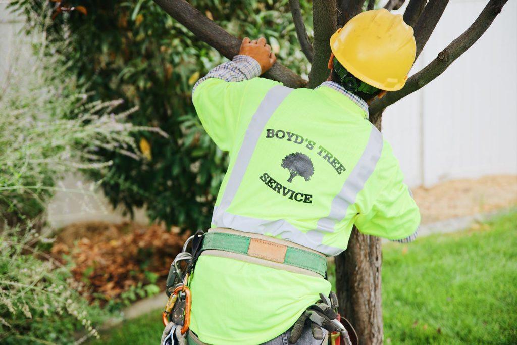 boyds tree service pasco