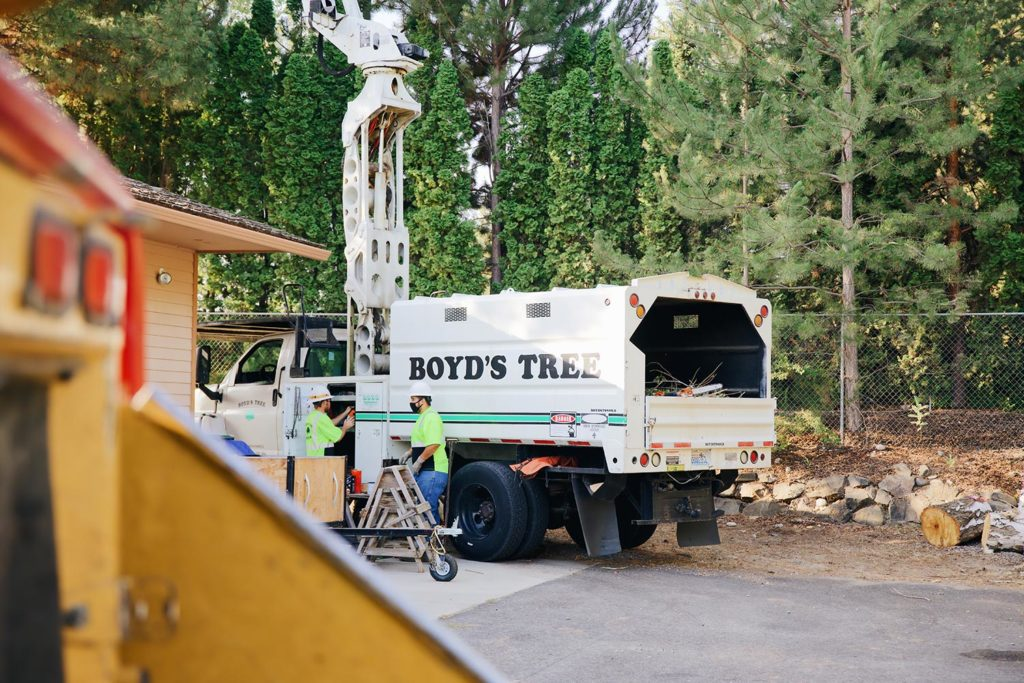 boyds tree service