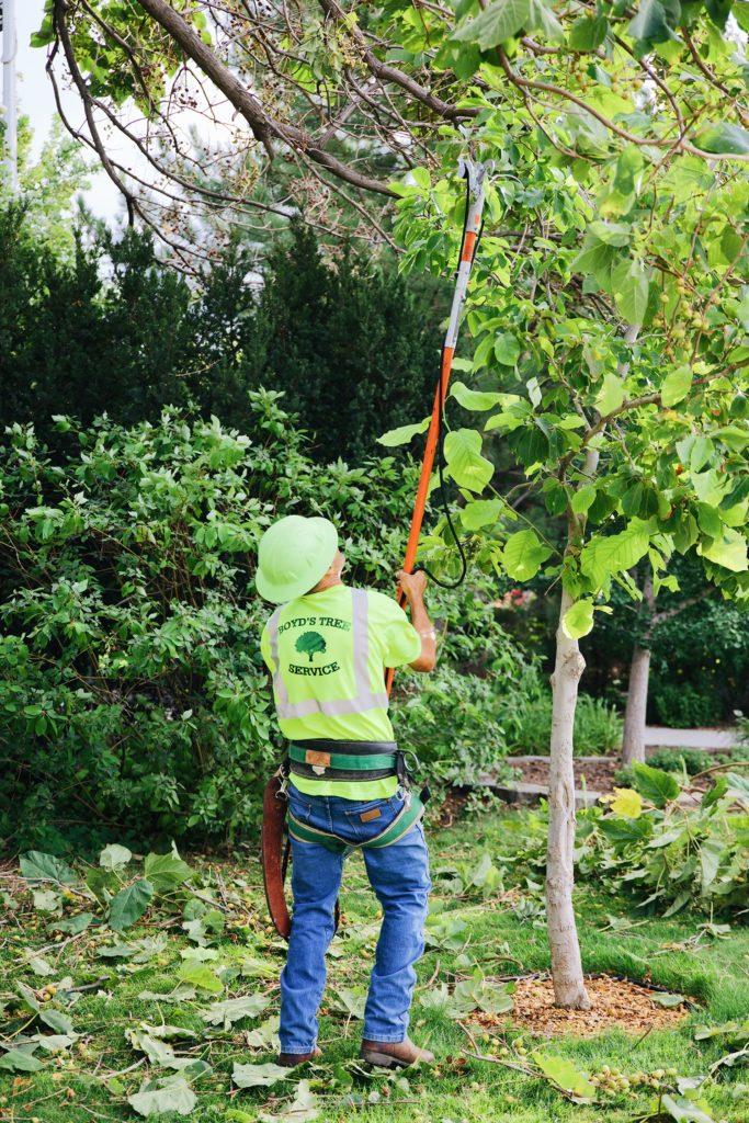 tree trimming in kennewick WA