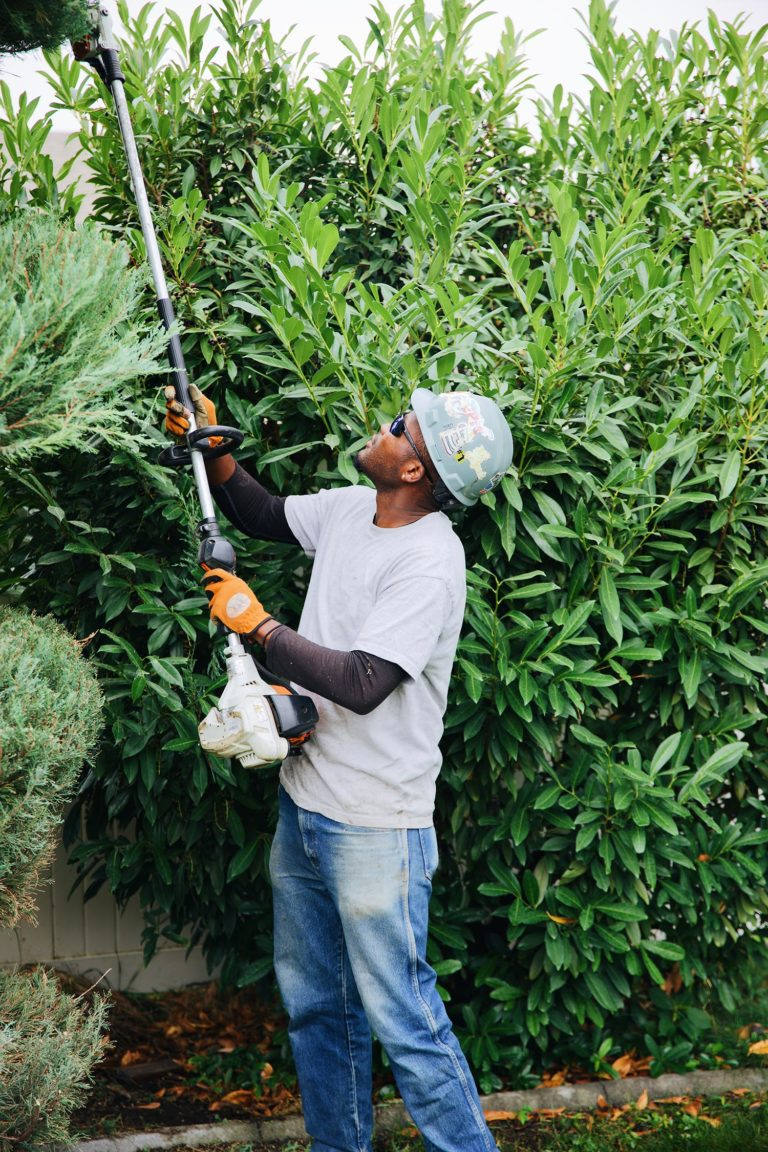 boyd's tree trimming
