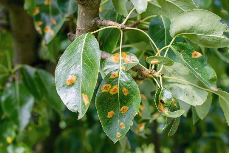 diseased tree boyd's