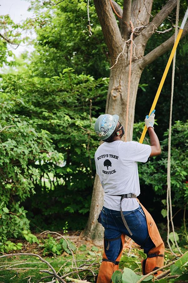 tree care service expert
