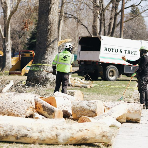 boyds emergency tree services