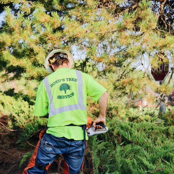 pasco tree service estimate