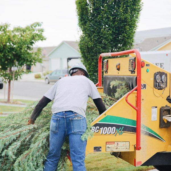 tree-trimming-pasco