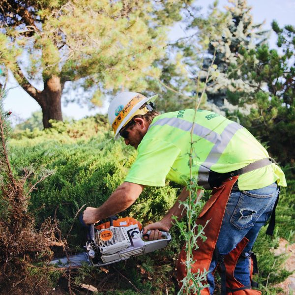 shrubbery trimming kennewick