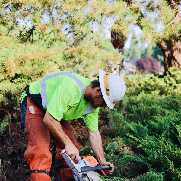 shrub removal pasco