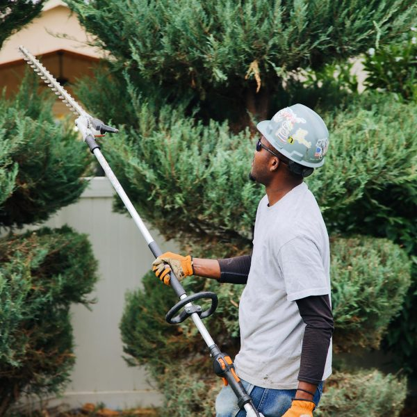 shrubbery removal richland