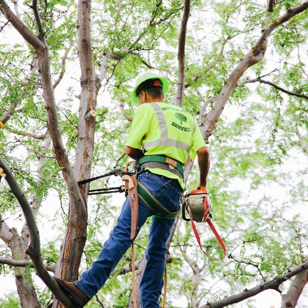 tree preservation pasco