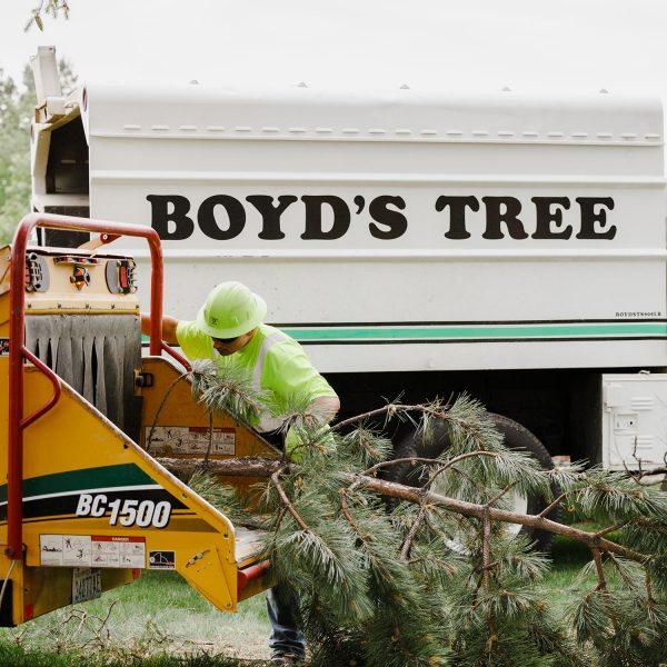 tree removal pasco