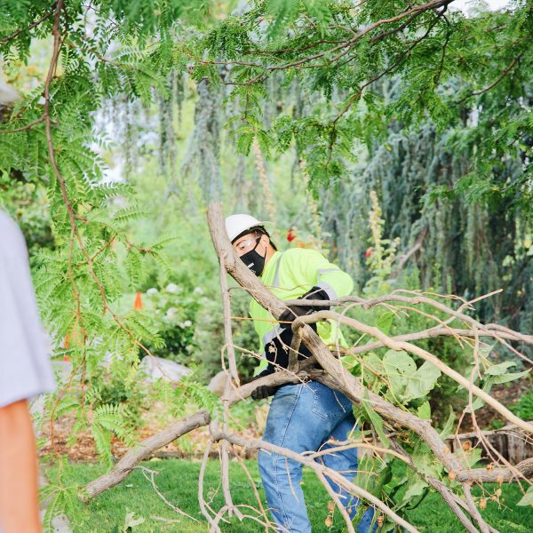 tree removal richland